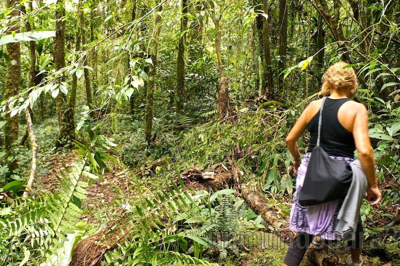 Travesía por la jungla