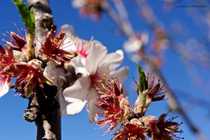 Almendros en flor, belleza en Tenerife