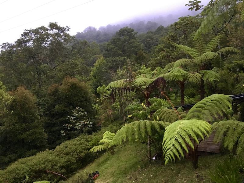 Bosques nubosos