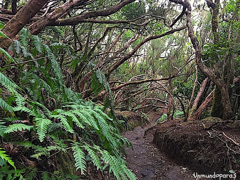Sendero del Bosque Encantado