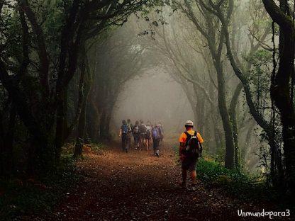 Sendero del Bosque Encantado y Reserva del Pijaral