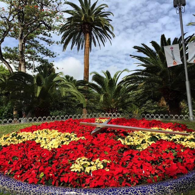 Reloj de flores en el Parque Garcia Sanabria #SantaCruzdeTenerife, se nota que es Navidad! #Tenerife #canarias