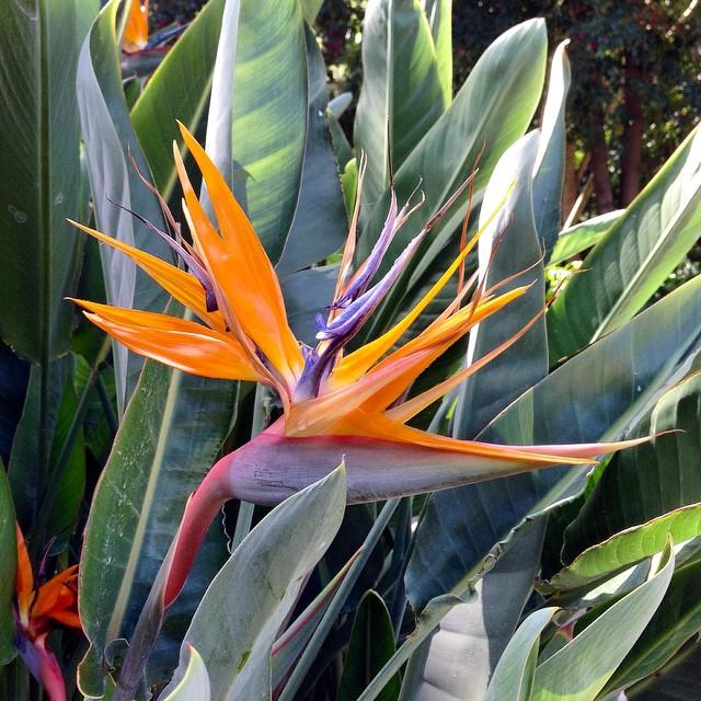 #SantaCruzdeTenerife un paraíso para las flores!#ParqueGarciaSanabria #Tenerife #Canarias
