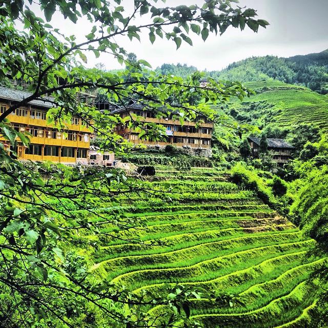 Arrozales de nuestra querida #Asia en poco nos volveremos a ver! #Indopara3 está en marcha! #Borneo #Malaysia #Indonesia #viajacontuhijo #viajesenfamilia #travelwithkids #paradise
